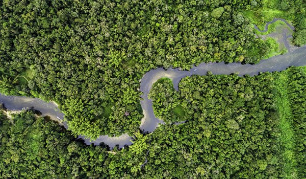 Bradesco, Itaú Unibanco and Santander announces joint plan to promote sustainable development of the Amazon